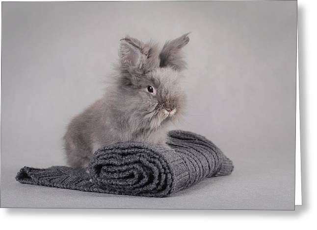 Rabbit At Grey Background Greeting Card by Waldek Dabrowski