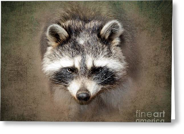 Raccoon 2 Greeting Card