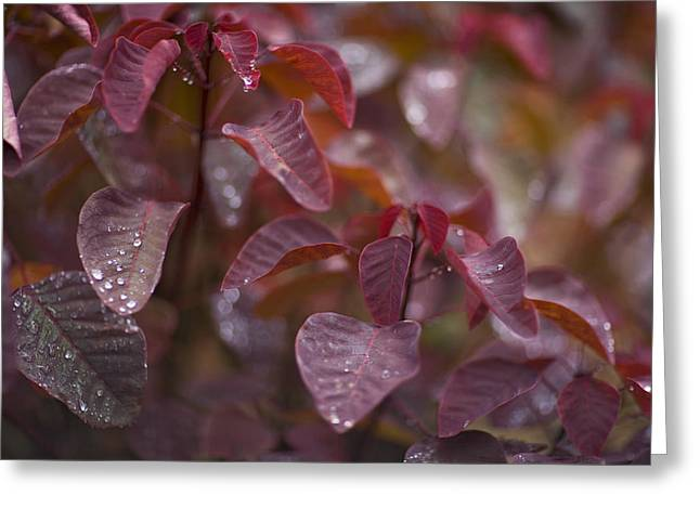Rain Drops Resting On Red Leaves Greeting Card