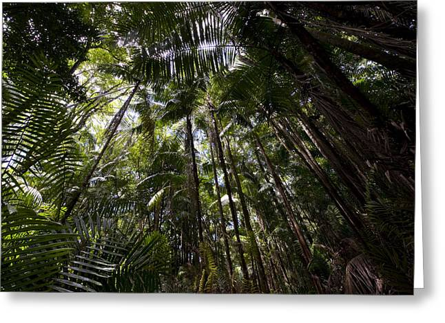 Rain Forest Canopy In Bako National Greeting Card