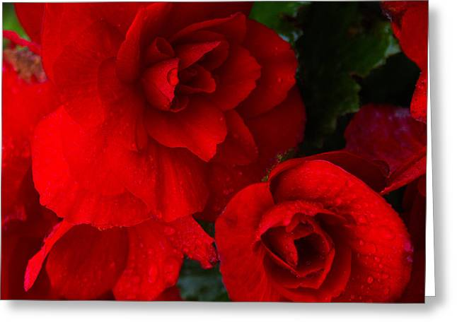 Rain Kissed Roses Greeting Card