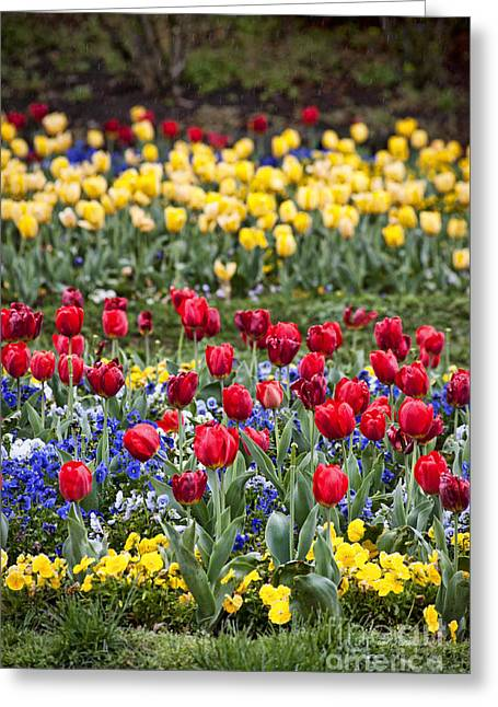Greeting Card featuring the photograph Rain On The Tulips by Cheryl Davis