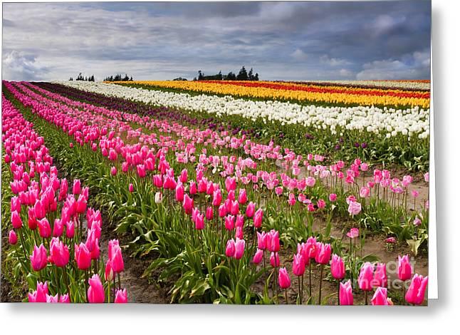 Rainbow Fields Greeting Card by Mike  Dawson