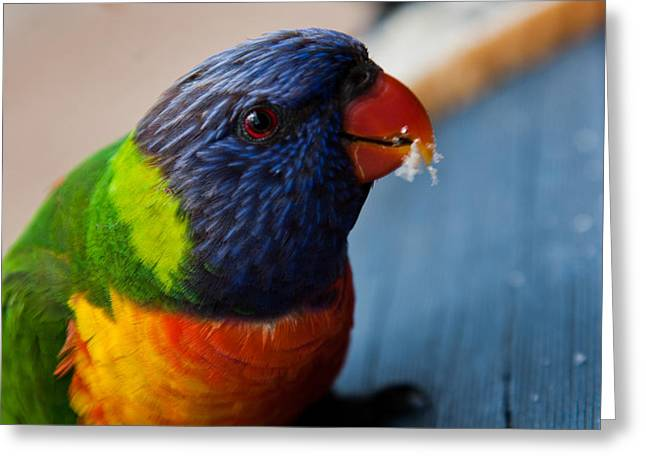 Greeting Card featuring the photograph Rainbow Lorikeet by Carole Hinding