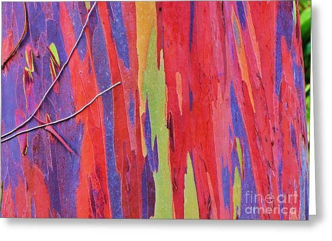 Greeting Card featuring the photograph Rainbow Of Eucalyptus Bark by Michele Penner