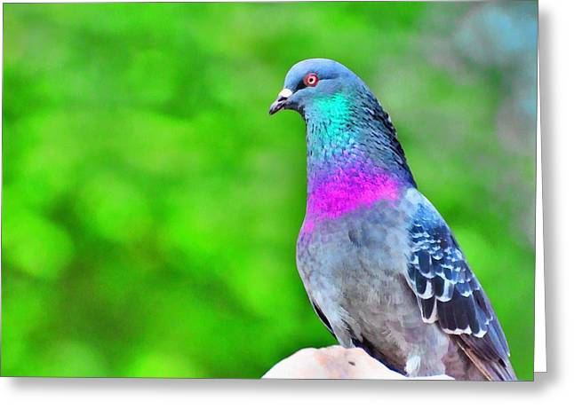Rainbow Pigeon Greeting Card