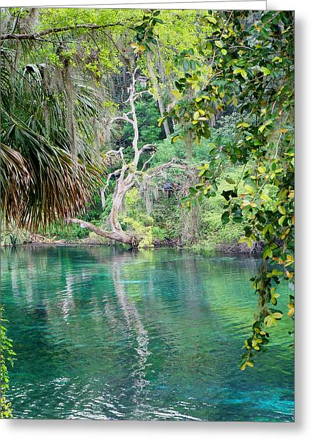 Rainbow Springs Greeting Card