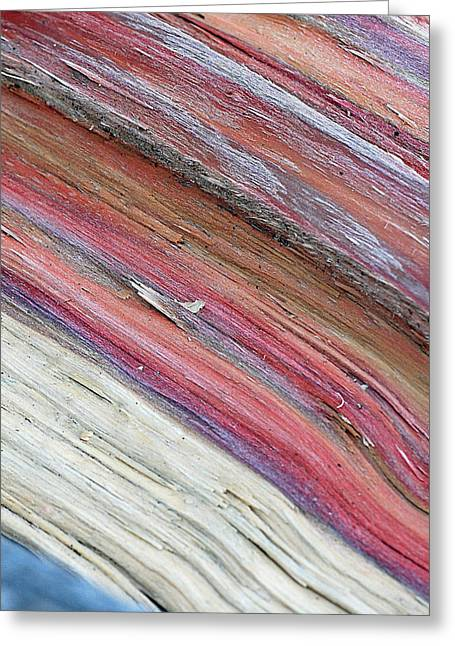 Greeting Card featuring the photograph Rainbow Wood by Lisa Phillips
