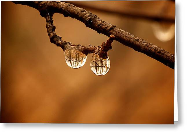 Raindrop Reflection Greeting Card