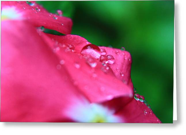 Raindrops On A Flower I Greeting Card