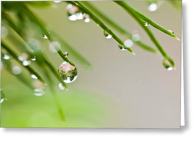 Greeting Card featuring the photograph Raindrops On Needles by Trevor Chriss