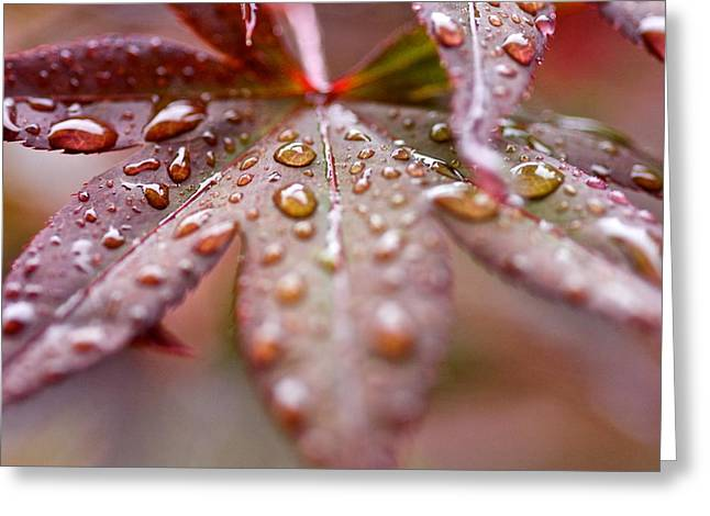 Raindrops Greeting Card by Scott Holmes