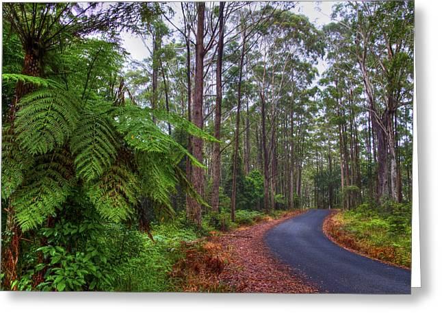 Rainforest - Port Macquarie - Australia Greeting Card by Bryan Freeman