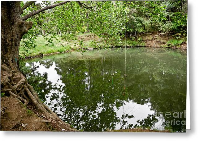 Rainforest Lake In New Zealand Greeting Card