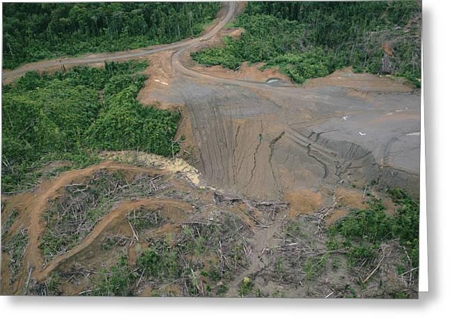 Rainforest Logging Activities Greeting Card