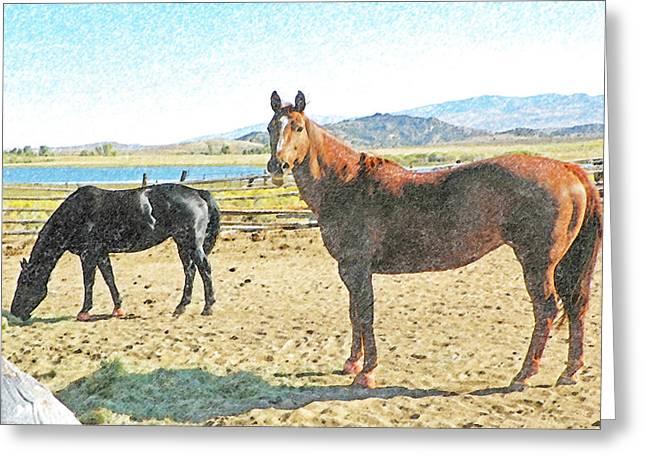 Ranch Horses Greeting Card
