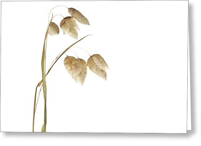 Rattlesnake Grass Number 2 Greeting Card by Carol Leigh