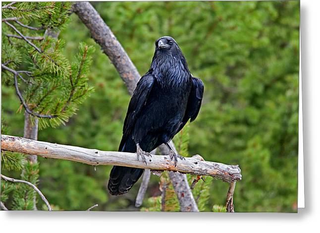 Raven Greeting Card by Elijah Weber