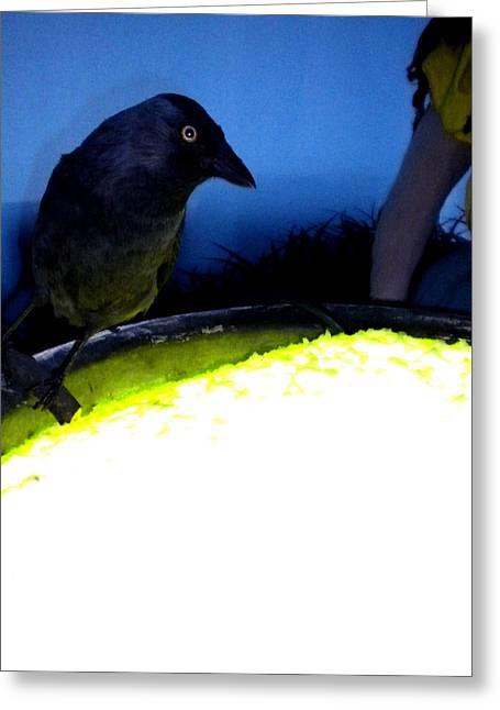 Raven Reflecting  Greeting Card by Colette V Hera  Guggenheim
