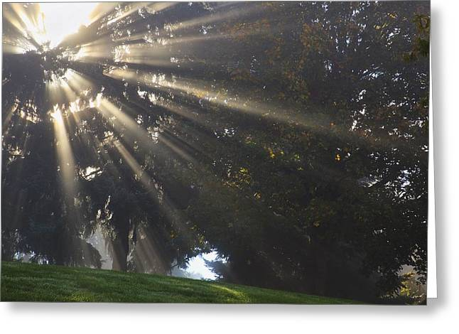 Rays Of Sunlight Through The Trees And Greeting Card