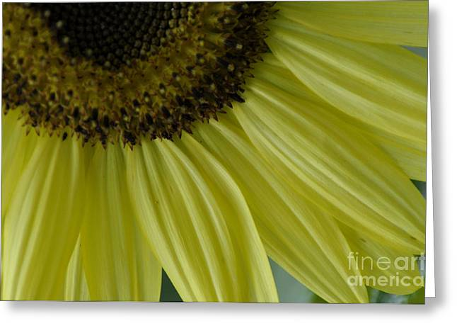 Rays Of Sunshine Greeting Card by Tamera James