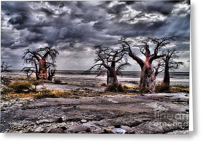 Rays On The Baobabs Greeting Card