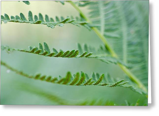 Reaching Ferns Greeting Card by Margaret Pitcher