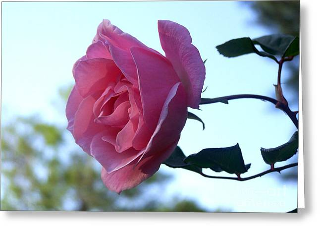 Greeting Card featuring the photograph Reaching For Sunlight by Kathy  White