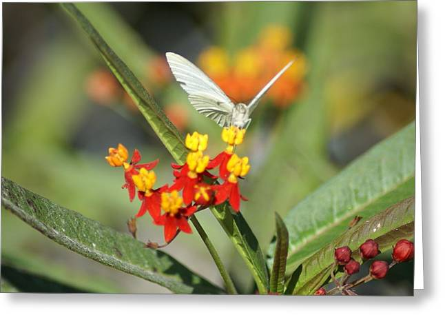 Greeting Card featuring the photograph Ready For Flight by Jerry Cahill