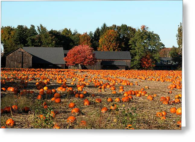 Ready For Pickin Greeting Card by Kenneth Drylie