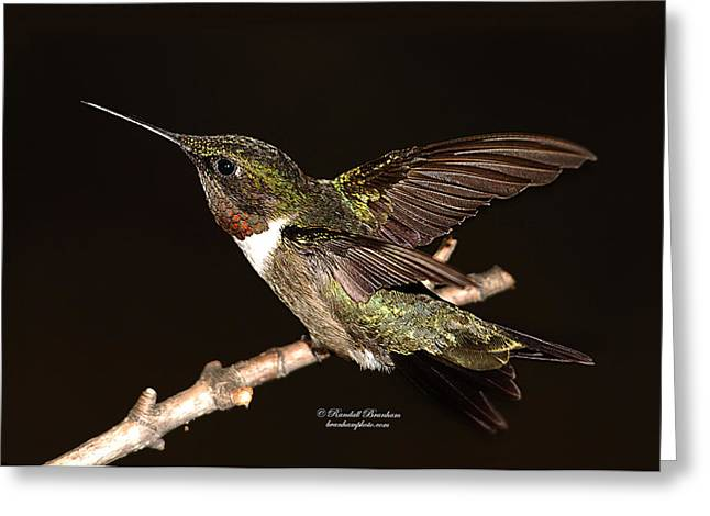 Greeting Card featuring the photograph Ready Set Go Hummer by Randall Branham