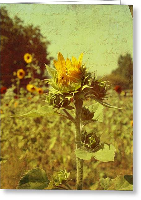 Ready To Bloom Greeting Card by Cathie Tyler