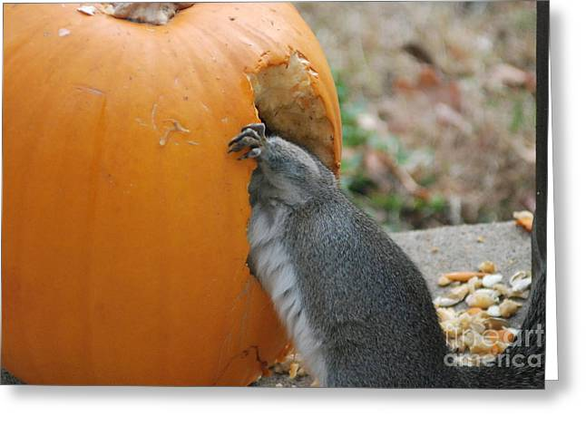 Greeting Card featuring the photograph Real Hungry Squirrel by Mark McReynolds