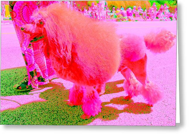 Really Pink Poodle Greeting Card by Randall Weidner