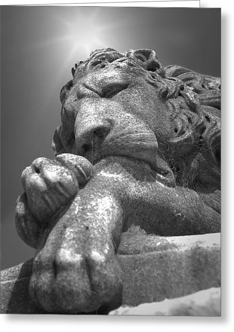 Recoleta Lion Greeting Card