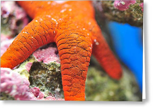 Greeting Card featuring the photograph Red   Sea Star by Puzzles Shum