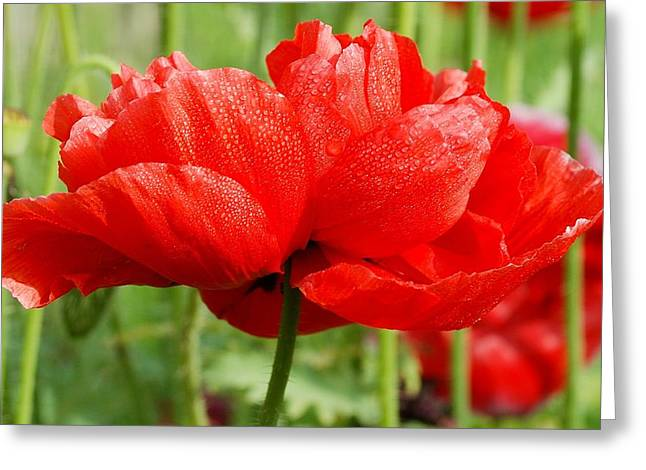 Greeting Card featuring the photograph Red And Green by Fotosas Photography