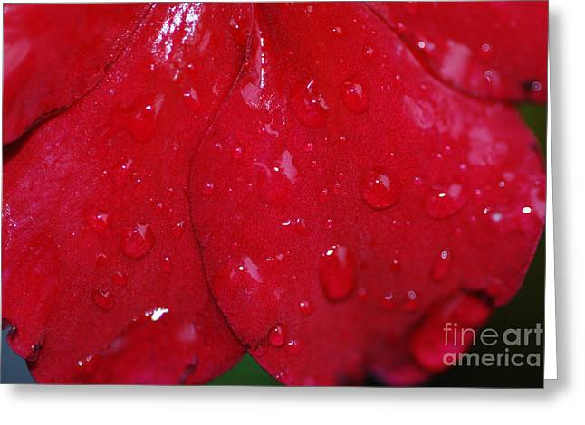 Red And Wet Greeting Card by Paul Ward