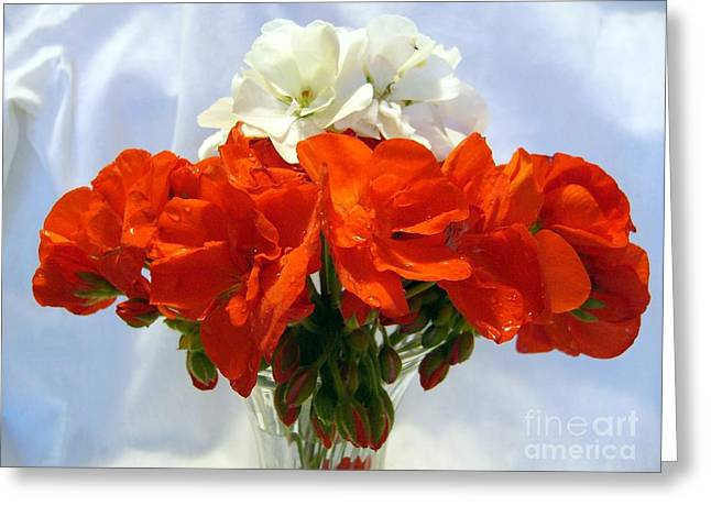 Greeting Card featuring the photograph Red And White by Jim Sauchyn