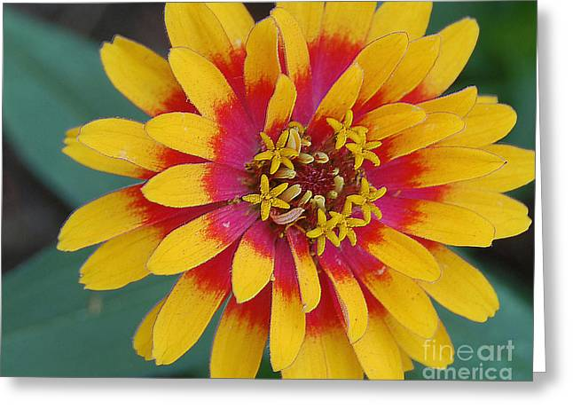 Red And Yellow Flower Greeting Card