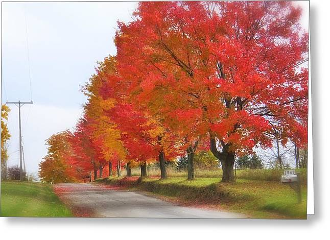 Red And Yellow Mercer Pa Greeting Card