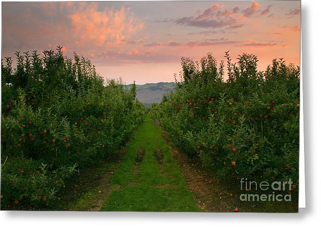 Red Apple Sunset Greeting Card by Mike  Dawson