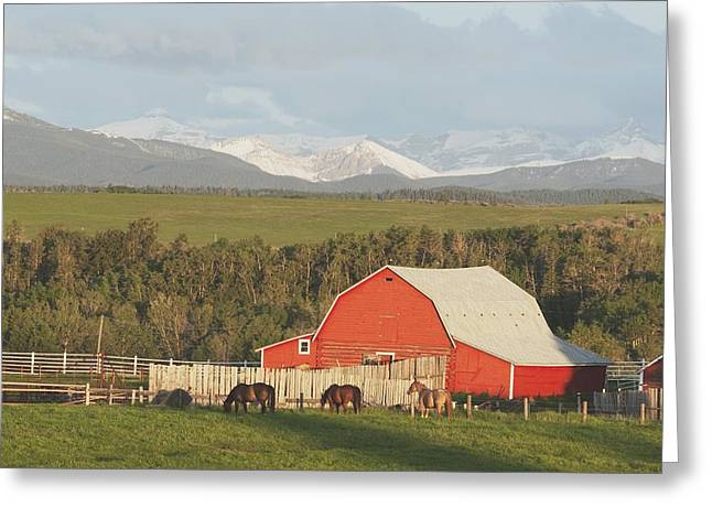 Red Barn With Horses Grazing Greeting Card