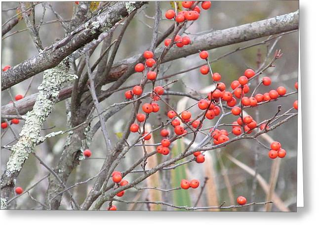 Red Berry Branch Greeting Card