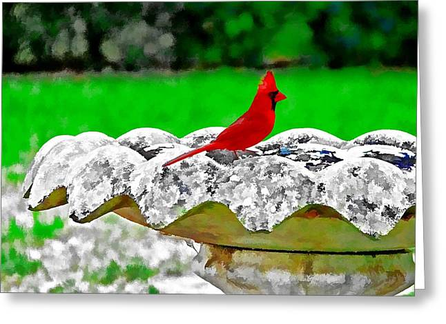 Red Bird In Bath Greeting Card