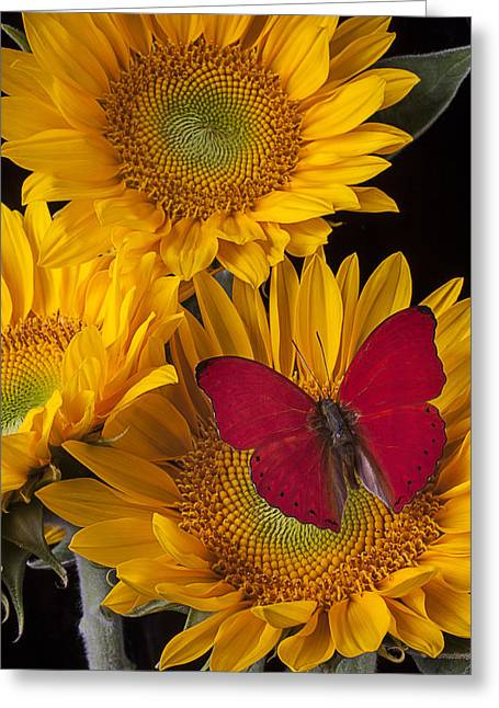 Red Buttefly And Three Sunflowers Greeting Card by Garry Gay