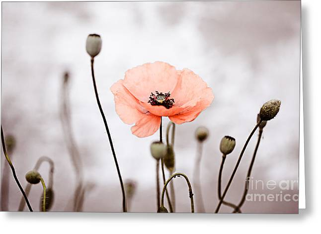 Red Corn Poppy Flowers 01 Greeting Card by Nailia Schwarz