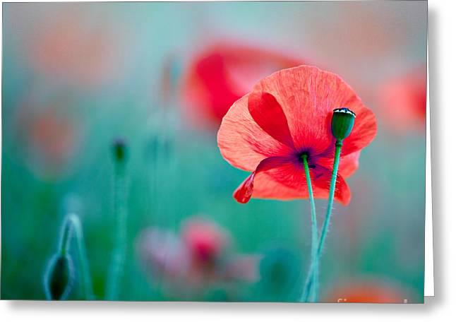Red Corn Poppy Flowers 04 Greeting Card by Nailia Schwarz
