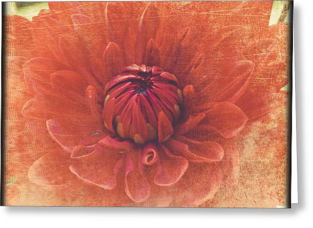 Greeting Card featuring the photograph Red Dahlia by Alana Ranney