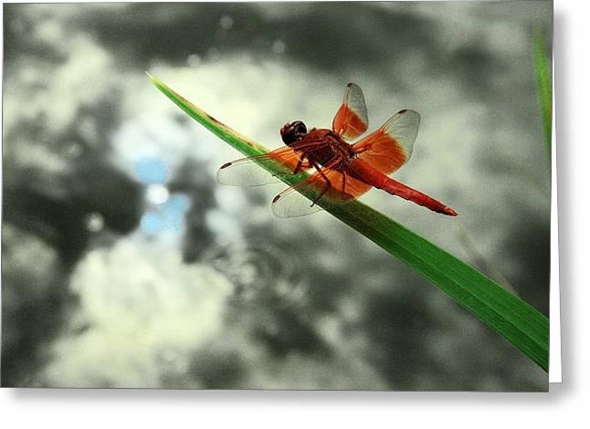 Red Dragonfly Greeting Card by Viktor Savchenko